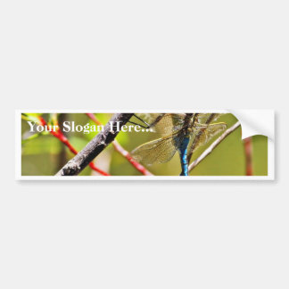 Dragonfly Insect Car Bumper Sticker