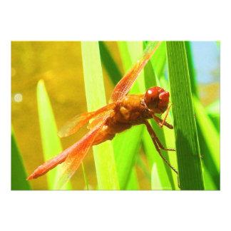 Dragonfly Invitation