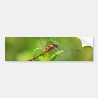 Dragonfly Landed on Green Garden Plant Bumper Sticker