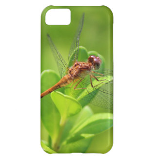 Dragonfly Landed on Green Garden Plant Case For iPhone 5C