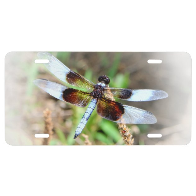 Dragonfly license plate