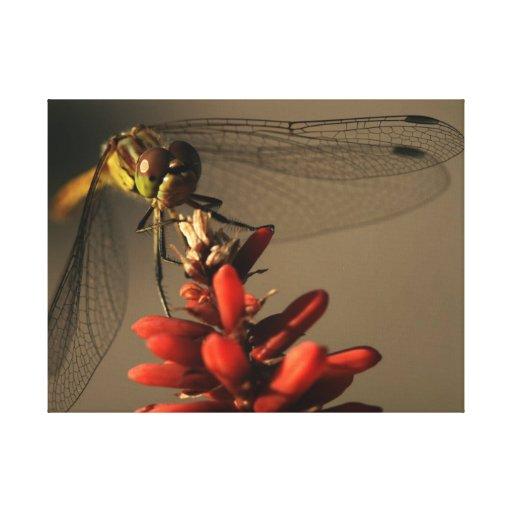 dragonfly lienzo envuelto para galerias