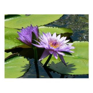 Dragonfly Lotus Postcard