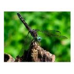 Dragonfly Macro Nature Photography Postcard