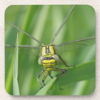 Dragonfly Macro Photo Beverage Coaster