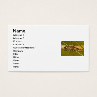 Dragonfly Macro Photo Business Card