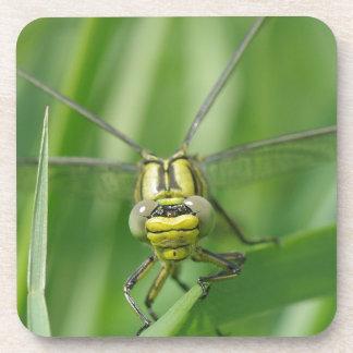 Dragonfly Macro Photo Coaster