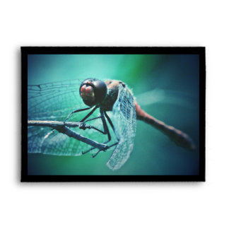 Dragonfly macro photography insect bug shoot envelope