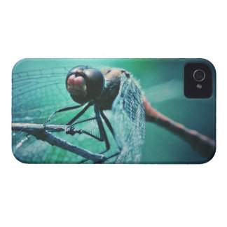 Dragonfly macro photography insect bug shoot iPhone 4 Case-Mate case