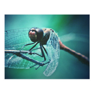 Dragonfly macro photography insect bug shoot postcard