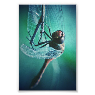 Dragonfly macro photography insect bug shoot poster
