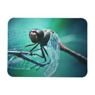 Dragonfly macro photography insect bug shoot rectangular photo magnet