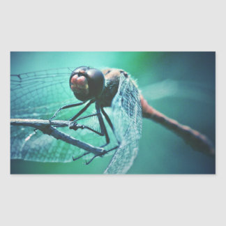 Dragonfly macro photography insect bug shoot rectangular sticker