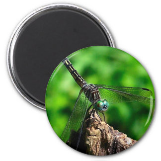 Dragonfly Nature Photography Magnet