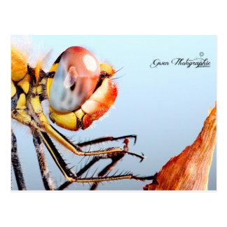 Dragonfly of Pourrières Postcard
