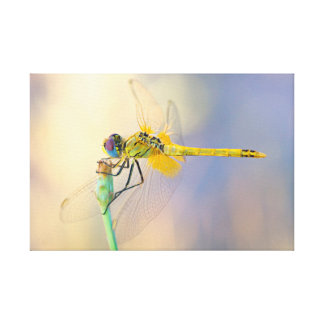 Dragonfly of several colors canvas print
