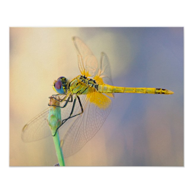 Dragonfly of Several Colors
