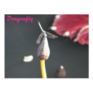 dragonfly on a bud postcard