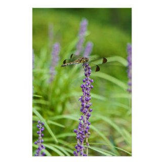 Dragonfly On A Flower Poster