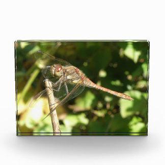 Dragonfly on a Twig Acrylic Photo Block