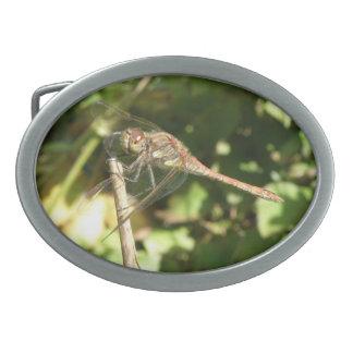 Dragonfly on a Twig Belt Buckle