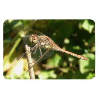 Dragonfly on a Twig Flexi Magnet