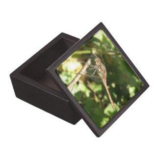 Dragonfly on a Twig Gift Box
