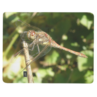 Dragonfly on a Twig Lined Journal