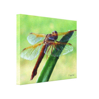 Dragonfly on Aloe Plant Wrapped Canvas