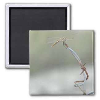 Dragonfly on Barb wire 2 Inch Square Magnet