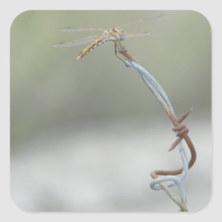 Dragonfly on Barb wire Square Sticker