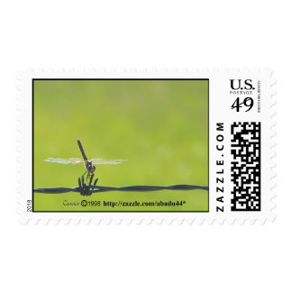 dragonfly on barbwire postage