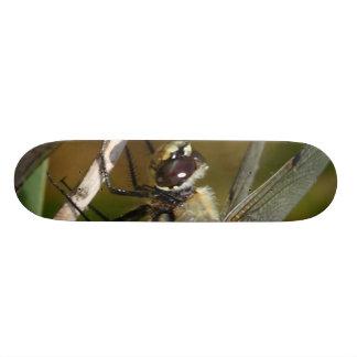 Dragonfly on Branch Skate Boards
