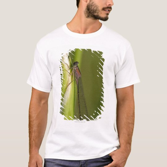 Dragonfly on budded iris T-Shirt