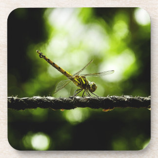 Dragonfly on green Coasters