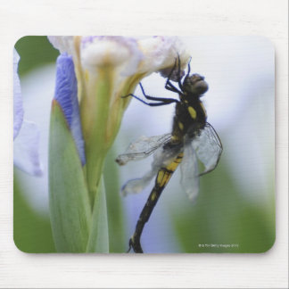 Dragonfly on iris mouse pad