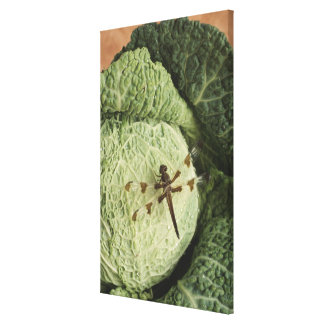 Dragonfly on lettuce canvas print