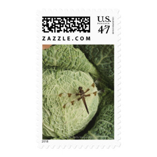 Dragonfly on lettuce postage