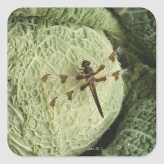 Dragonfly on lettuce square sticker