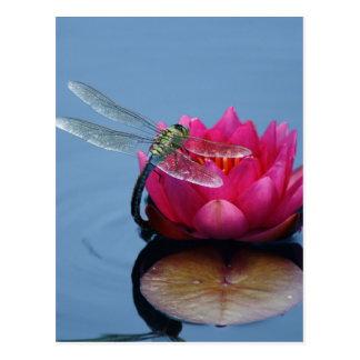 Dragonfly On Lotus Flower Postcard