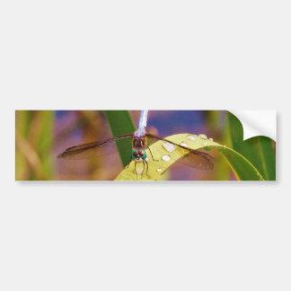 Dragonfly on raindrop leaf bumper sticker