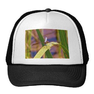 Dragonfly on raindrop leaf mesh hats