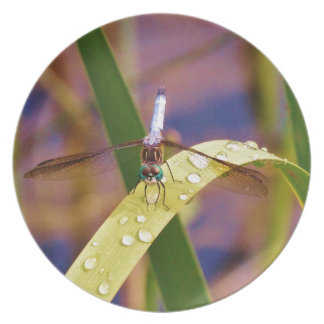 Dragonfly on raindrop leaf plate
