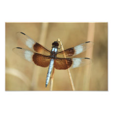 Dragonfly on Reed Photo Print
