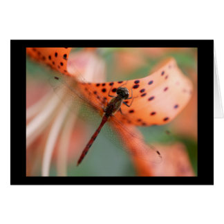 DragonFly on Tiger Lilly #2 Card