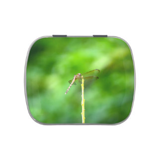 dragonfly on yellow stick green background insect jelly belly tins
