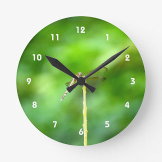 dragonfly on yellow stick green background insect wallclock