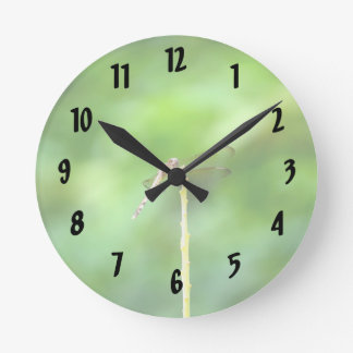 dragonfly on yellow stick green background insect clock
