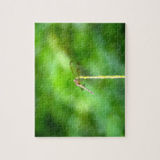 dragonfly on yellow stick green background insect jigsaw puzzle