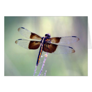 dragonfly - pastel card